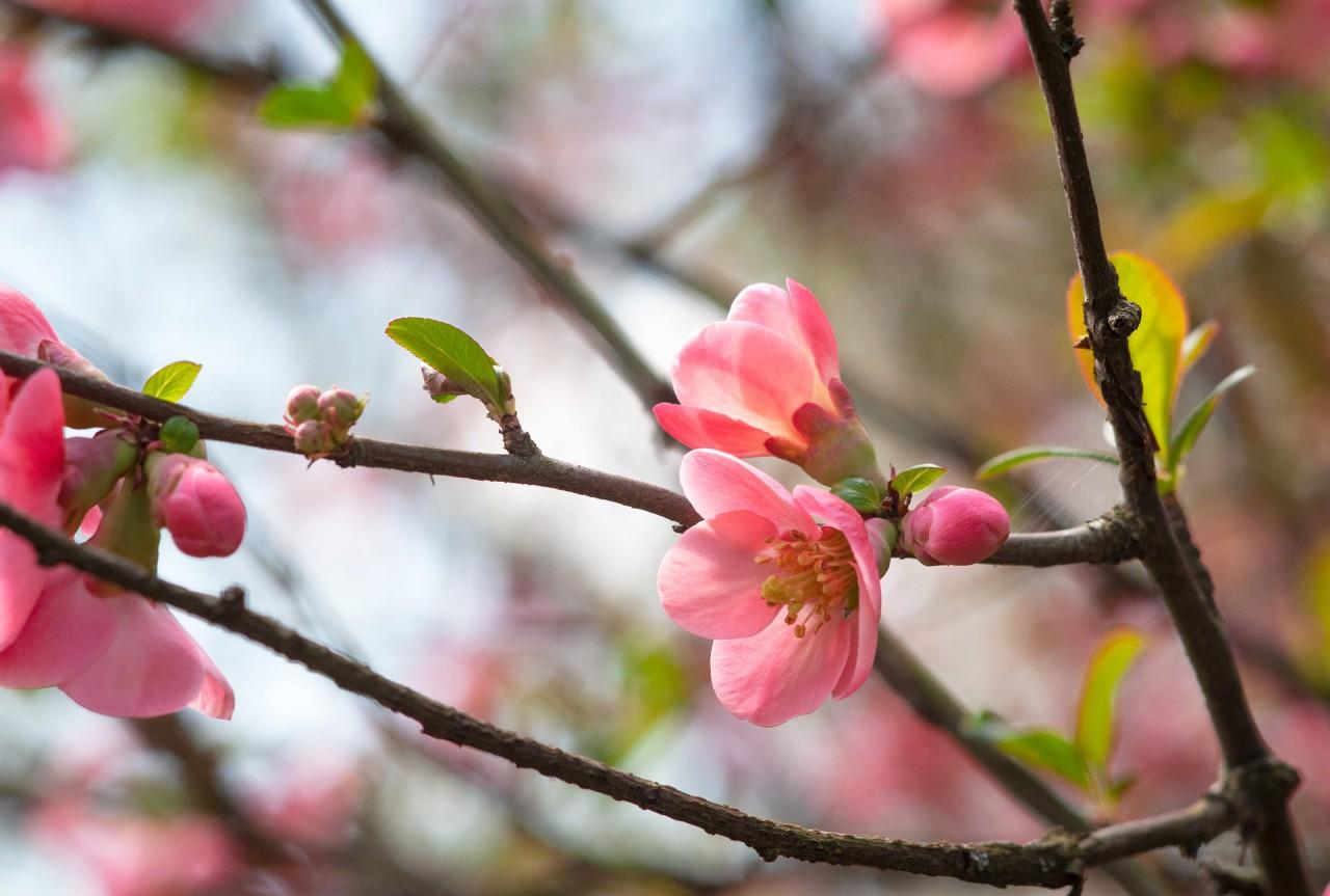 spring-4118527_1920.jpg