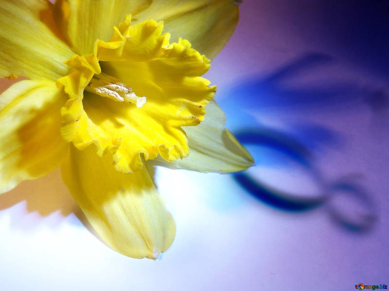 texture-background-congratulations-narcissus-march-8-341.jpg