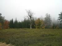 Naturbelassene Wege im Nationalpark