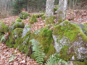 VIA NOVA Europäischer Pilgerweg  - Etappe Böhmerwald im Herbst 3.jpg